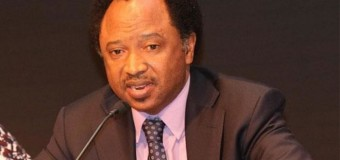 Interview: How We Brokered Negotiation Of 82 Freed Chibok Girls – Shehu Sani
